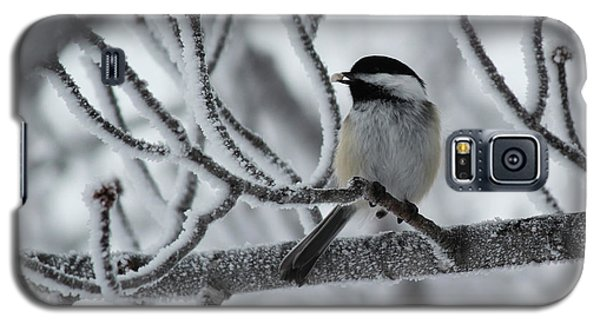 Galaxy S5 Case featuring the photograph Black-capped Chickadee by Ryan Crouse