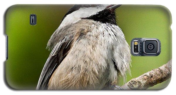 Black Capped Chickadee Singing Galaxy S5 Case