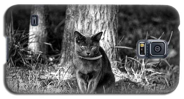 Galaxy S5 Case featuring the photograph Black Cat by Jerome Lynch