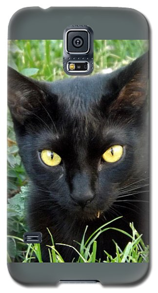 Black Cat Galaxy S5 Case by Lingfai Leung