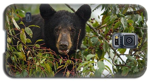 Bear In A Cherry Tree Galaxy S5 Case