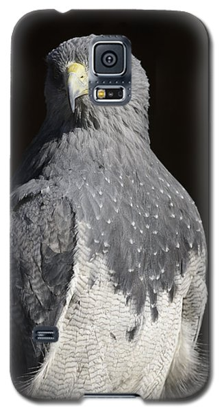Black Chested Buzzard-eagle No 1 Galaxy S5 Case by Andy-Kim Moeller