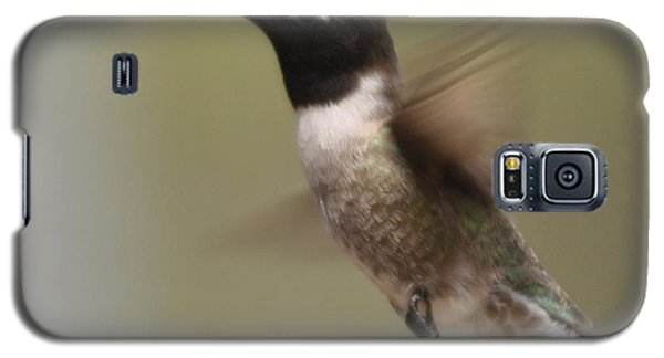Black-chinned Hummingbird Galaxy S5 Case