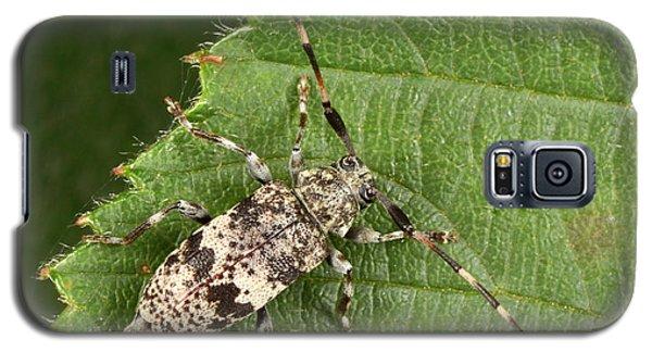 Black-clouded Longhorn Beetle Galaxy S5 Case