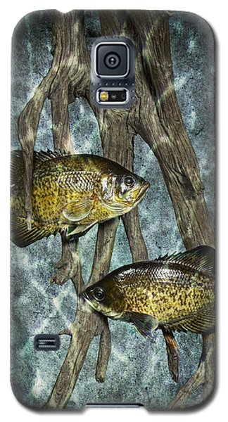 Black Crappies A Fish Image No 0143 Blue Version Galaxy S5 Case