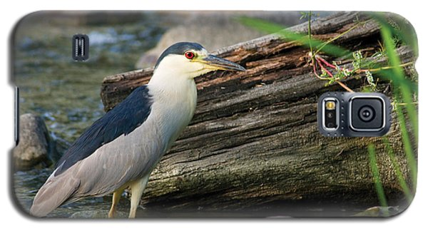 Black-crowned Night-heron Galaxy S5 Case