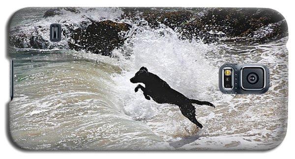 Black Dog Galaxy S5 Case by Tom Conway