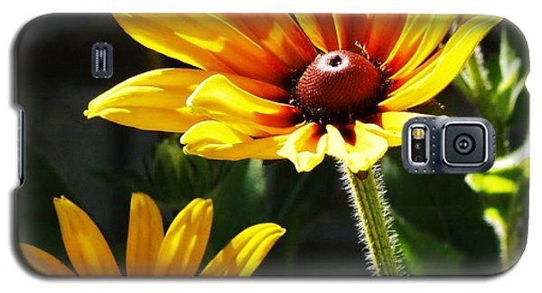 Galaxy S5 Case featuring the photograph Black Eyed Susan by Al Fritz