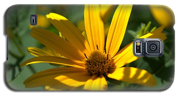 Galaxy S5 Case featuring the photograph Black Eyed Susan by Cathy Shiflett