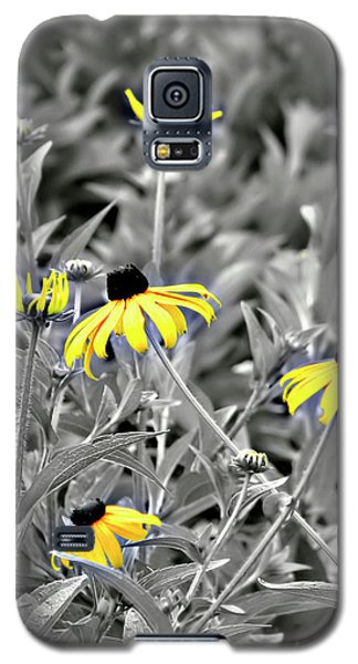 Black-eyed Susan Field Galaxy S5 Case