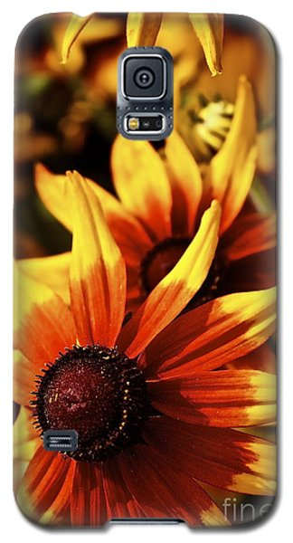 Galaxy S5 Case featuring the photograph Black Eyed Susan by Linda Bianic