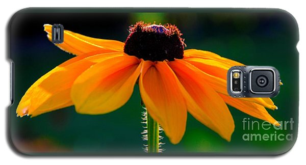Black Eyed Susan Galaxy S5 Case