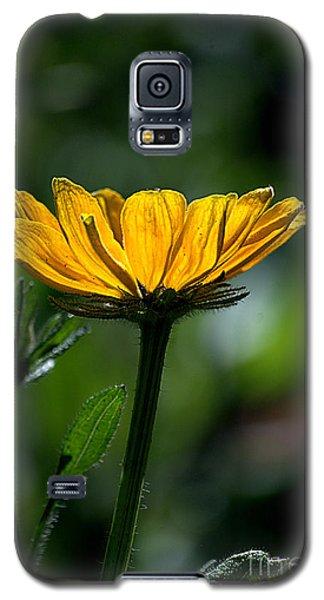 Black Eyed Susan Galaxy S5 Case by Sharon Elliott
