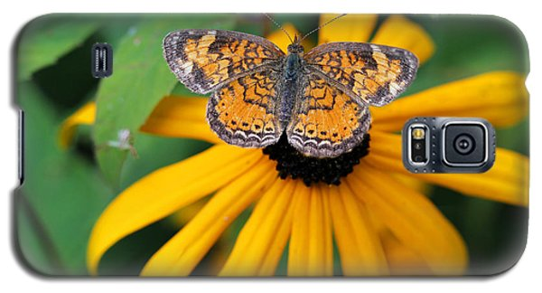 Black Eyed Susan With Butterfly Galaxy S5 Case by Mary Bedy