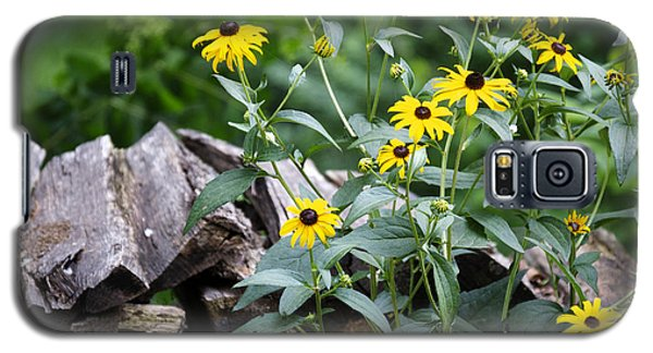 Black-eyed Susans Galaxy S5 Case