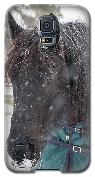 Black Horse In Snow Galaxy S5 Case