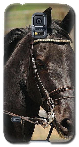 Black Mare Portrait Galaxy S5 Case