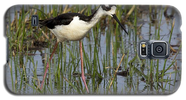 Black-necked Stilt Galaxy S5 Case