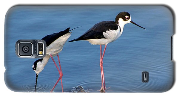 Galaxy S5 Case featuring the photograph Black-necked Stilts by Bob and Jan Shriner