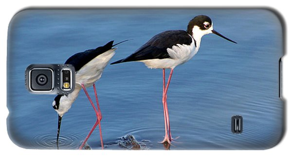 Black-necked Stilts Galaxy S5 Case