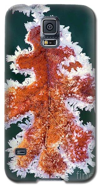 Black Oak Leaf Rime Ice Yosemite National Park California Galaxy S5 Case