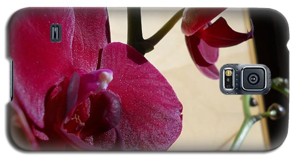 Galaxy S5 Case featuring the photograph Black Orchid by Ramona Matei