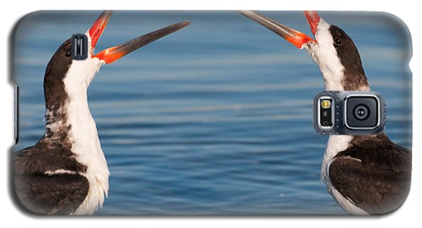 Galaxy S5 Case featuring the photograph Black Skimmers by Avian Resources