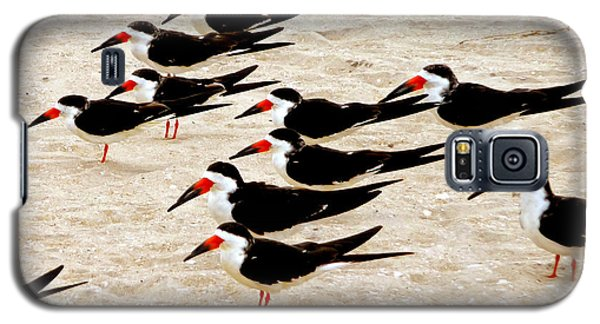 Black Skimmers On The Beach Galaxy S5 Case