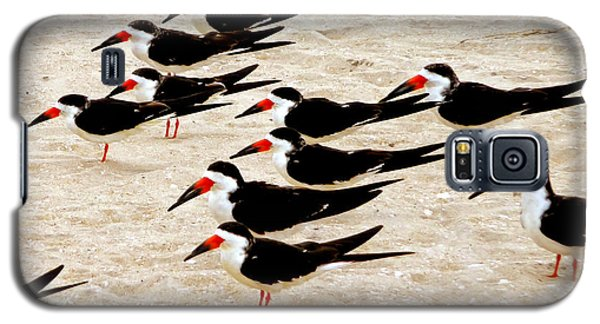 Galaxy S5 Case featuring the photograph Black Skimmers On The Beach by Jim Whalen