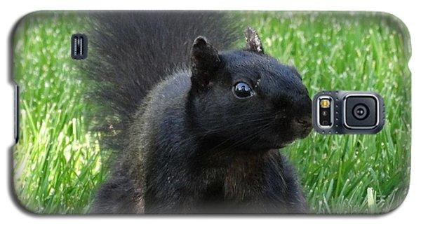 Black Squirrel Galaxy S5 Case by J L Zarek