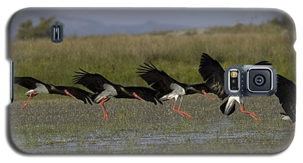 Black Stork Landing. Galaxy S5 Case