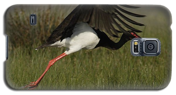 Black Stork Taking Off. Galaxy S5 Case
