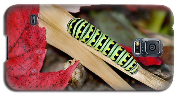 Black Swallowtail Butterfly Caterpillar Galaxy S5 Case