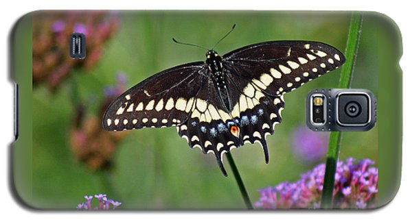 Black Swallowtail Butterfly  Galaxy S5 Case