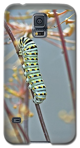 Black Swallowtail Butterfly-to-be Galaxy S5 Case
