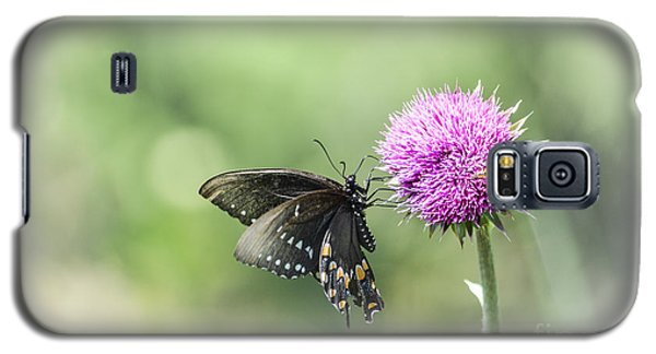 Black Swallowtail Dreaming Galaxy S5 Case by Debbie Green