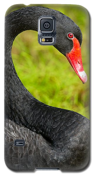 Galaxy S5 Case featuring the photograph Black Swan by Avian Resources