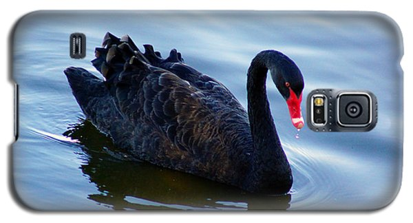 Galaxy S5 Case featuring the photograph Black Swan by Cassandra Buckley