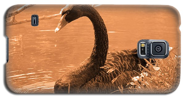 Galaxy S5 Case featuring the photograph Black Swan by Leticia Latocki