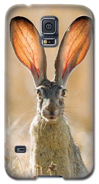 Black-tailed Hare Davis California Galaxy S5 Case by Doug Herr