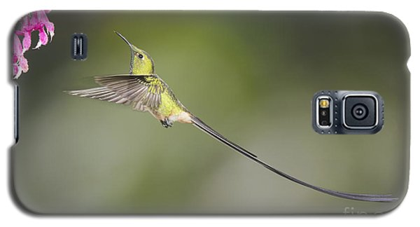Galaxy S5 Case featuring the photograph Black-tailed Trainbearer Hummingbird by Dan Suzio