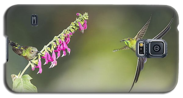 Galaxy S5 Case featuring the photograph Black-tailed Trainbearer Hummingbirds by Dan Suzio