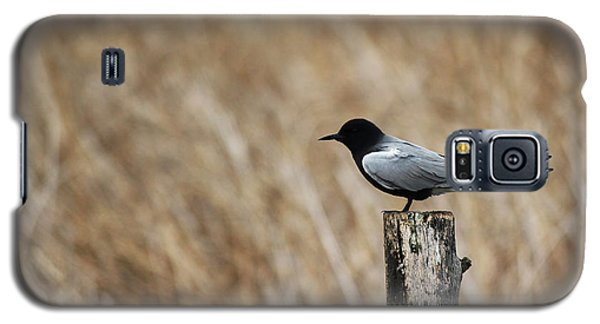 Galaxy S5 Case featuring the photograph Black Tern by Ryan Crouse
