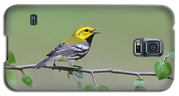 Galaxy S5 Case featuring the photograph Black Throated Green Warbler Calling by Daniel Behm