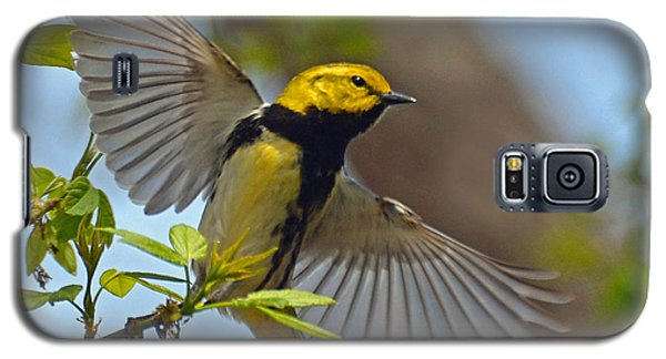 Black Throated Green Warbler Galaxy S5 Case