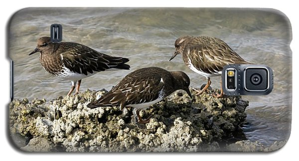 Black Turnstones Feeding Galaxy S5 Case by Bob Gibbons
