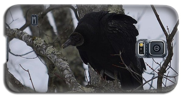 Galaxy S5 Case featuring the photograph Black Vulture by Randy Bodkins
