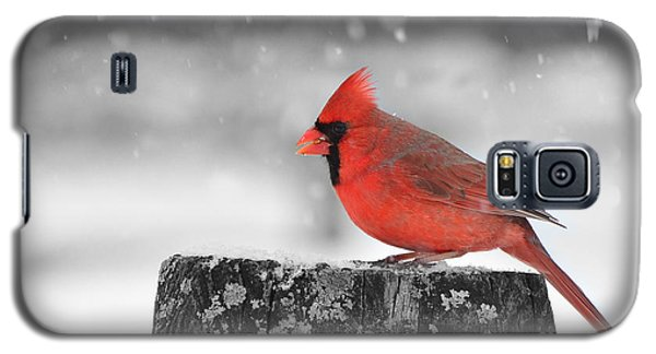 Winter Colors Galaxy S5 Case by Stephen Flint