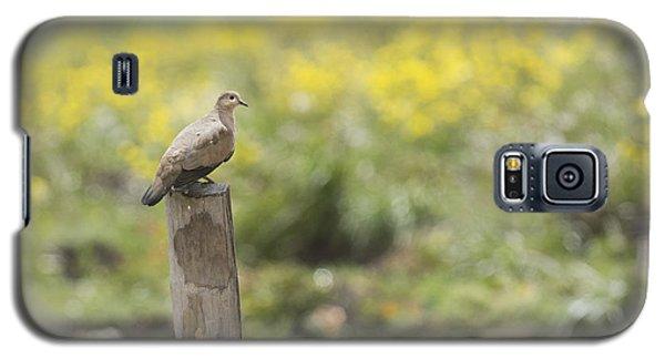 Black-winged Ground Dove Galaxy S5 Case