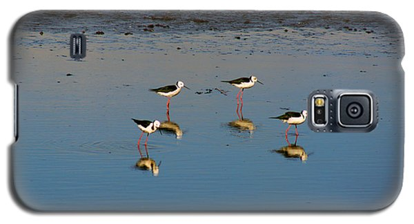 Galaxy S5 Case featuring the photograph Black Winged Stilts by Cassandra Buckley